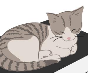J'ai adopté un chaton!